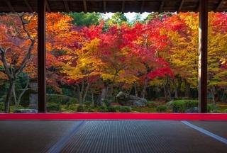 autumn-momiji.jpg