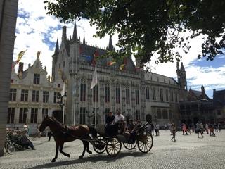 belgium_horses.jpg