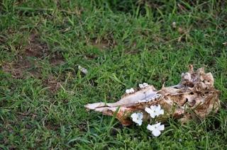 bone-flower.jpg