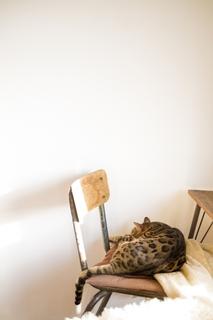 cat_chair.jpg