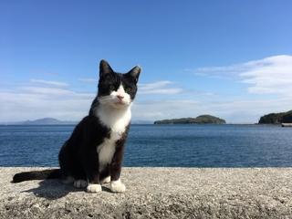 cg-cat.jpg