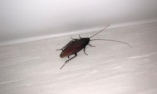 cockroach_2.jpg