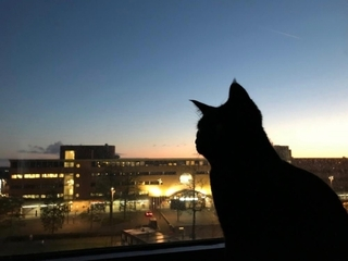 evening_cat.jpg