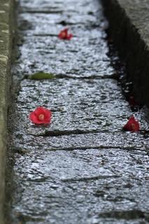 fallen_camellia.jpg
