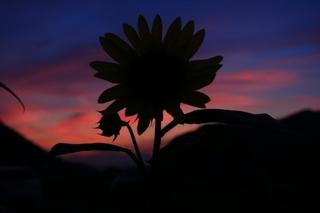 flower-night.jpg