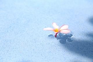 flower_on_water.jpg