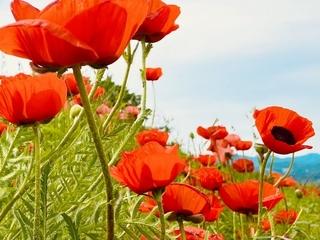 flowers_field.jpg