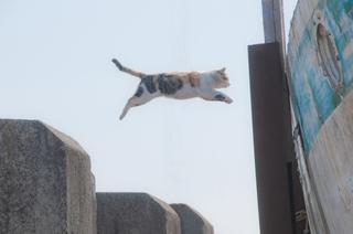jumping_cat.jpg