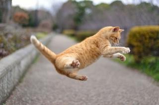 jumping_cat2.jpg