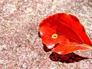 leaf-red.jpg