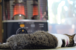 lying-down-cat.jpg