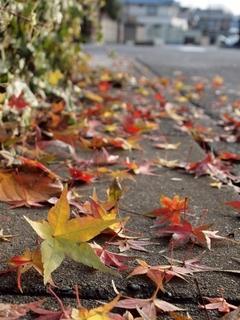 maple-leaves.jpg
