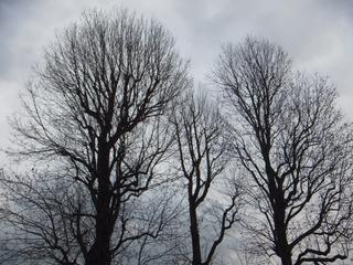 march-skies.jpg