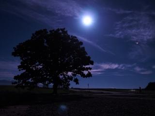 moon_and_tree.jpg