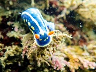 sea_slug.jpg