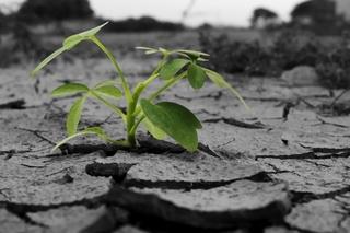 stone-plant.jpg