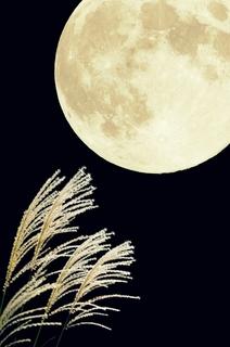 susuki-moon.jpg
