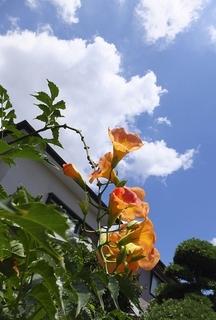 trumpet-flower.jpg