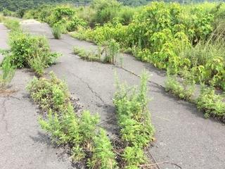 weeds-by-the-road.jpg