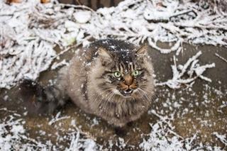 wintercat.jpg